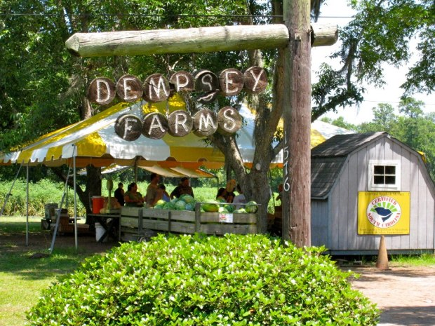 Dempsey-Farms-Beaufort-S.C.-u-pick-farms
